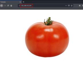 Tomato Vulnhub Walkthrough